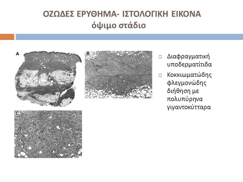 ΟΖΩΔΕΣ ΕΡΥΘΗΜΑ- ΙΣΤΟΛΟΓΙΚΗ ΕΙΚΟΝΑ όψιμο στάδιο