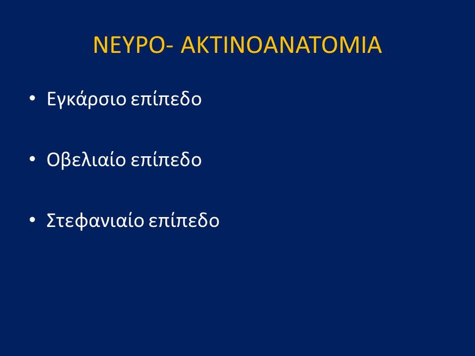 ΝΕΥΡΟ- AKTINOΑΝΑΤΟΜΙΑ