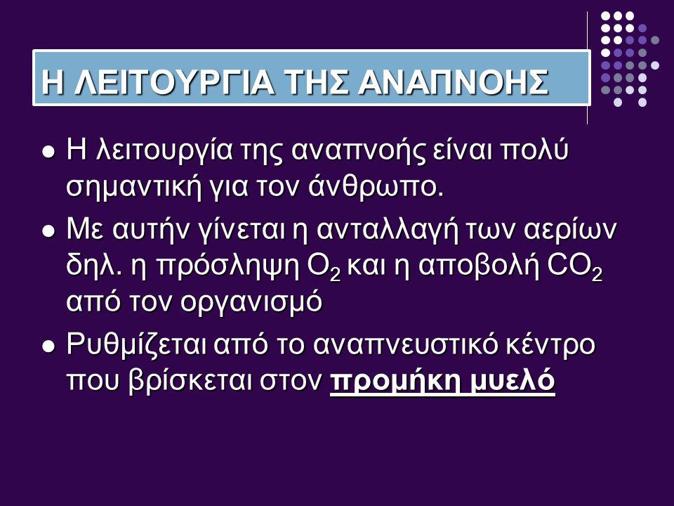 Η ΛΕΙΤΟΥΡΓΙΑ ΤΗΣ ΑΝΑΠΝΟΗΣ