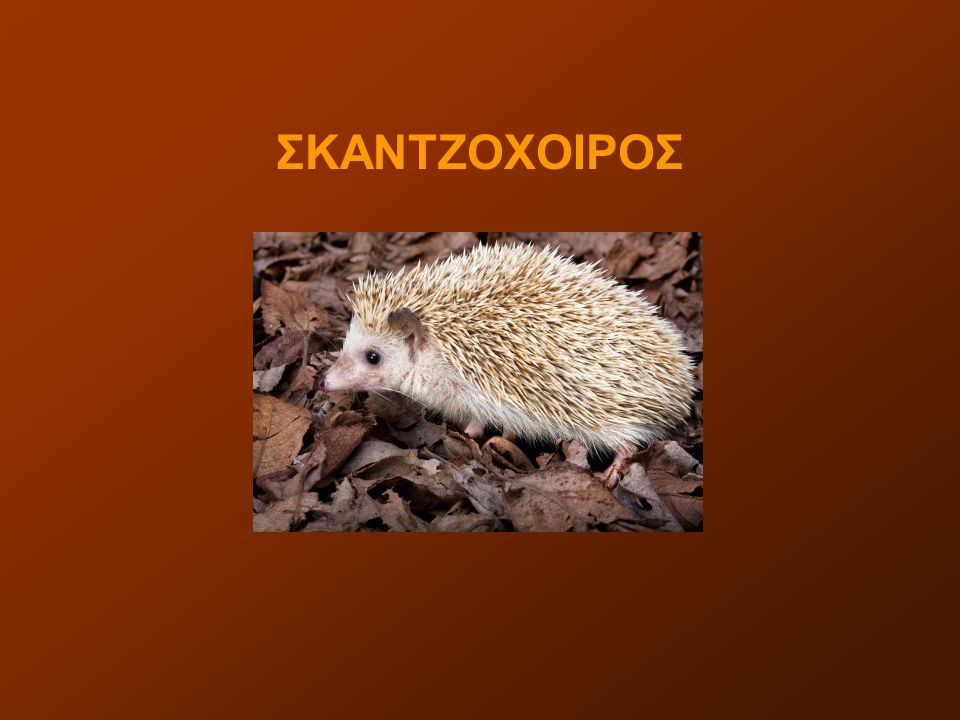 ΣΚΑΝΤΖΟΧΟΙΡΟΣ