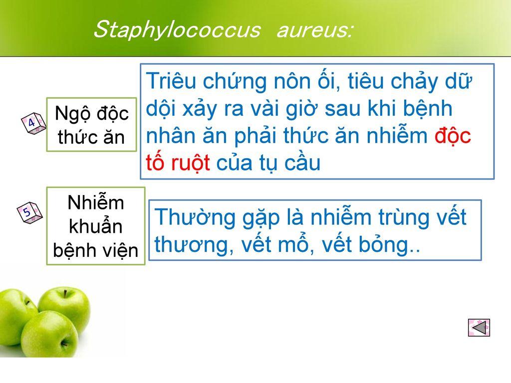 Staphylococcus aureus: