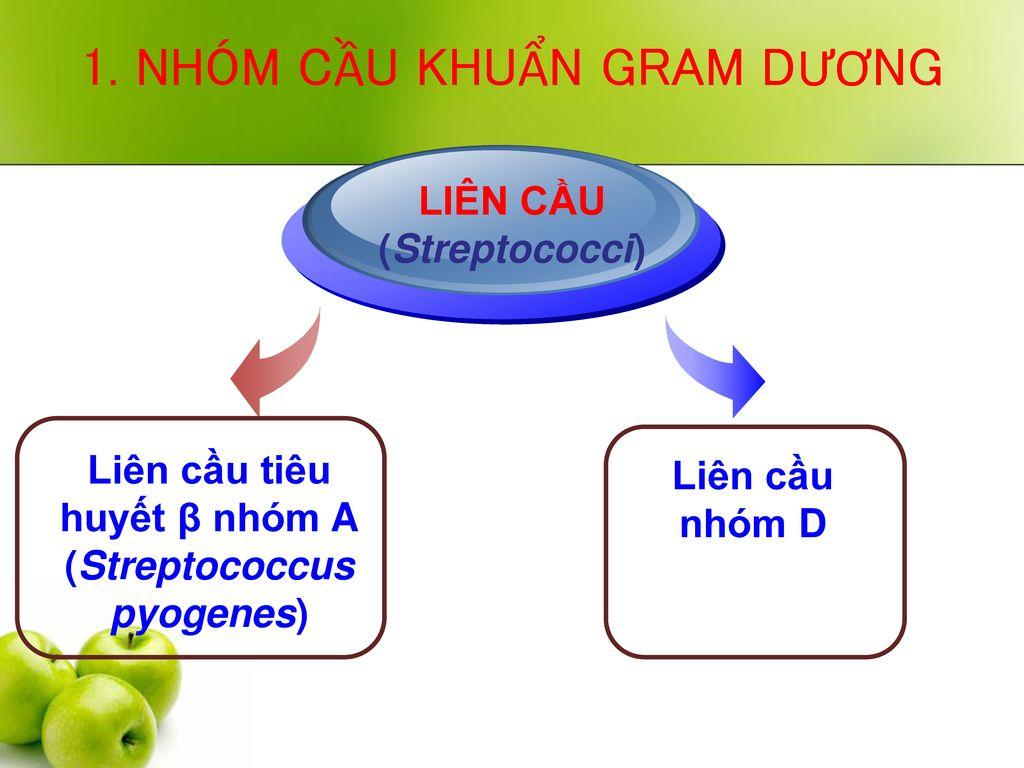 Liên cầu tiêu huyết β nhóm A (Streptococcus pyogenes)