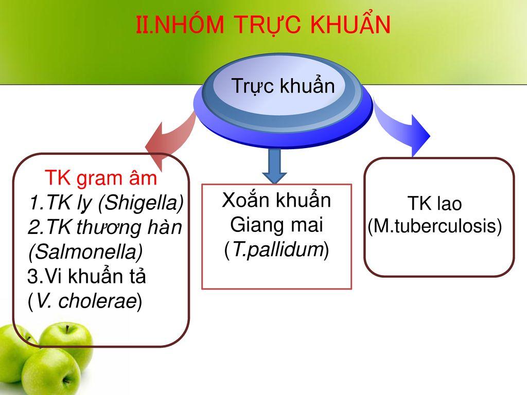 II.NHÓM TRỰC KHUẨN Trực khuẩn TK gram âm 1.TK lỵ (Shigella)