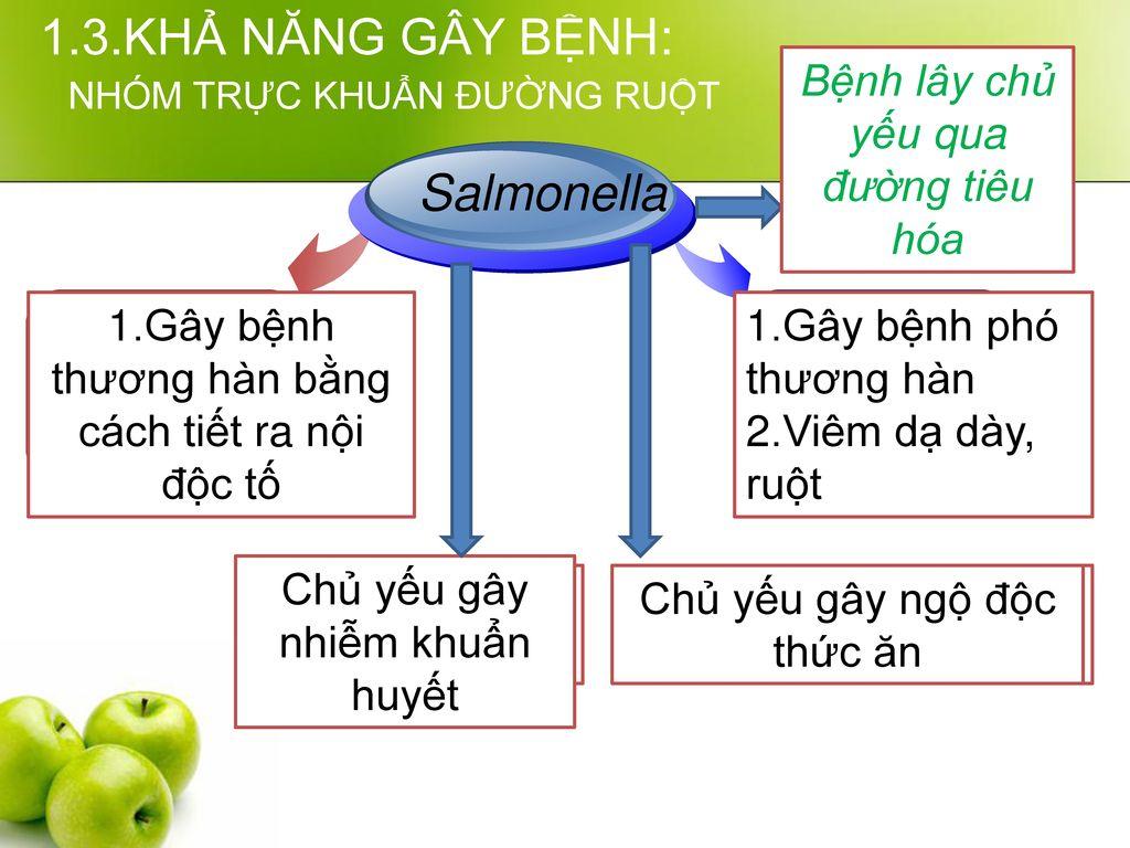 1.3.KHẢ NĂNG GÂY BỆNH: Salmonella