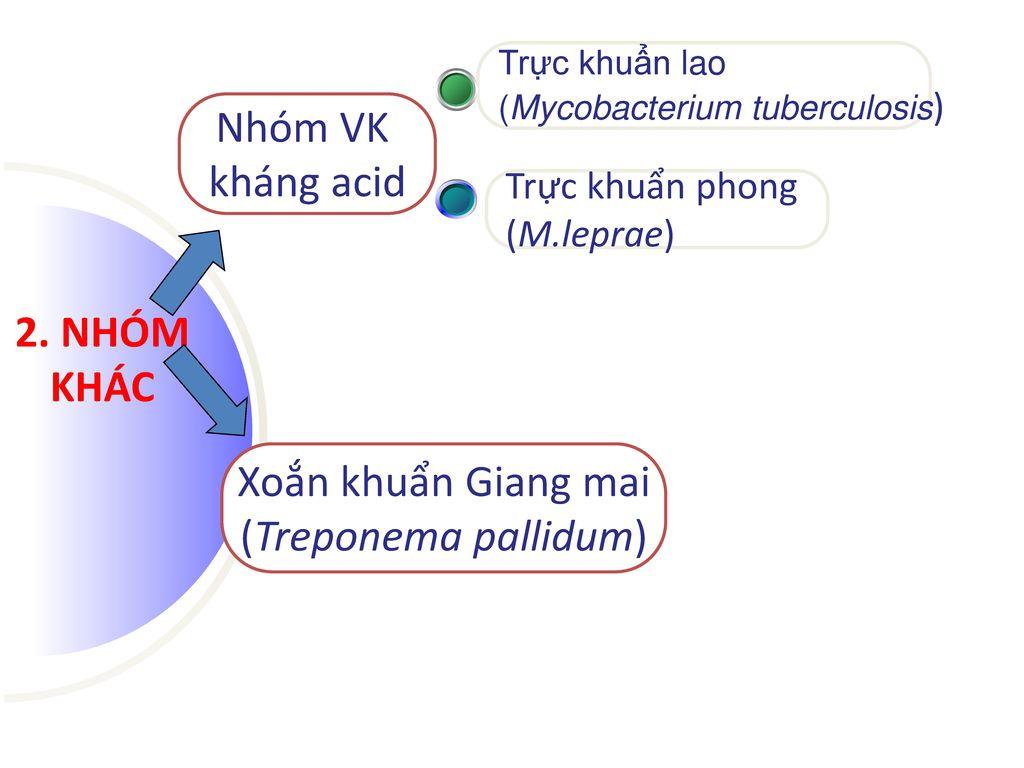 Nhóm VK kháng acid 2. NHÓM KHÁC Xoắn khuẩn Giang mai
