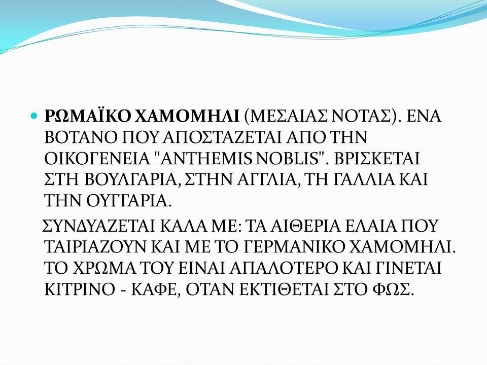 ΡΩΜΑΪΚΟ ΧΑΜΟΜΗΛΙ (ΜΕΣΑΙΑΣ ΝΟΤΑΣ)