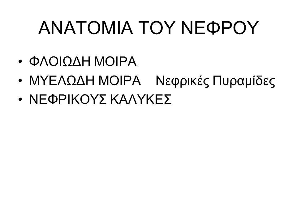 ΑΝΑΤΟΜΙΑ ΤΟΥ ΝΕΦΡΟΥ ΦΛΟΙΩΔΗ ΜΟΙΡΑ ΜΥΕΛΩΔΗ ΜΟΙΡΑ Νεφρικές Πυραμίδες