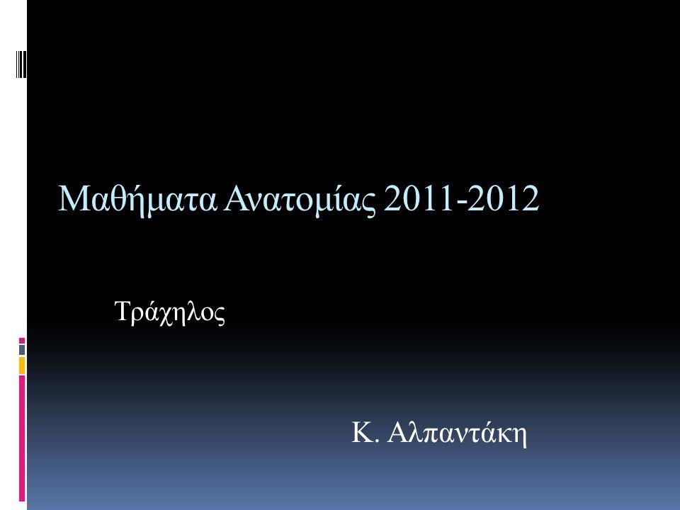 Μαθήματα Ανατομίας 2011-2012 Τράχηλος Κ. Αλπαντάκη