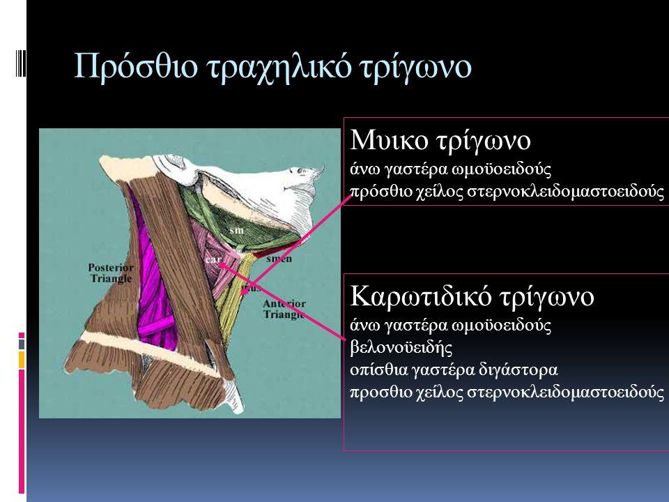 Πρόσθιο τραχηλικό τρίγωνο
