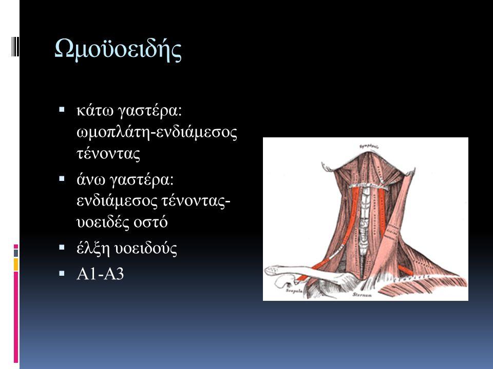 Ωμοϋοειδής κάτω γαστέρα: ωμοπλάτη-ενδιάμεσος τένοντας