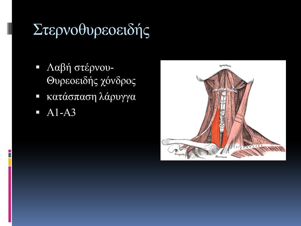 Στερνοθυρεοειδής Λαβή στέρνου- Θυρεοειδής χόνδρος κατάσπαση λάρυγγα