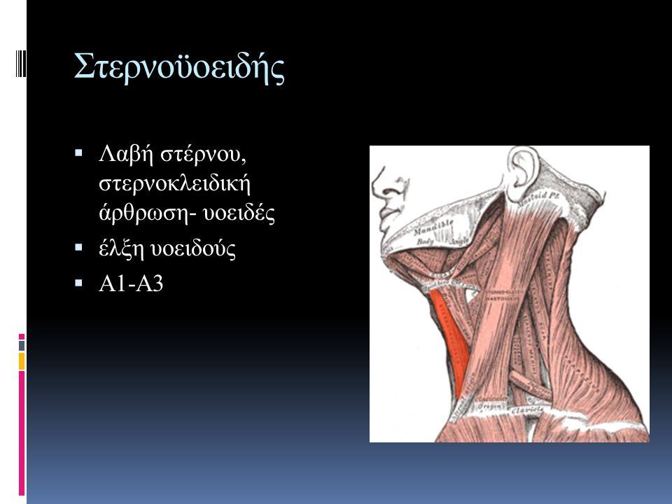 Στερνοϋοειδής Λαβή στέρνου, στερνοκλειδική άρθρωση- υοειδές