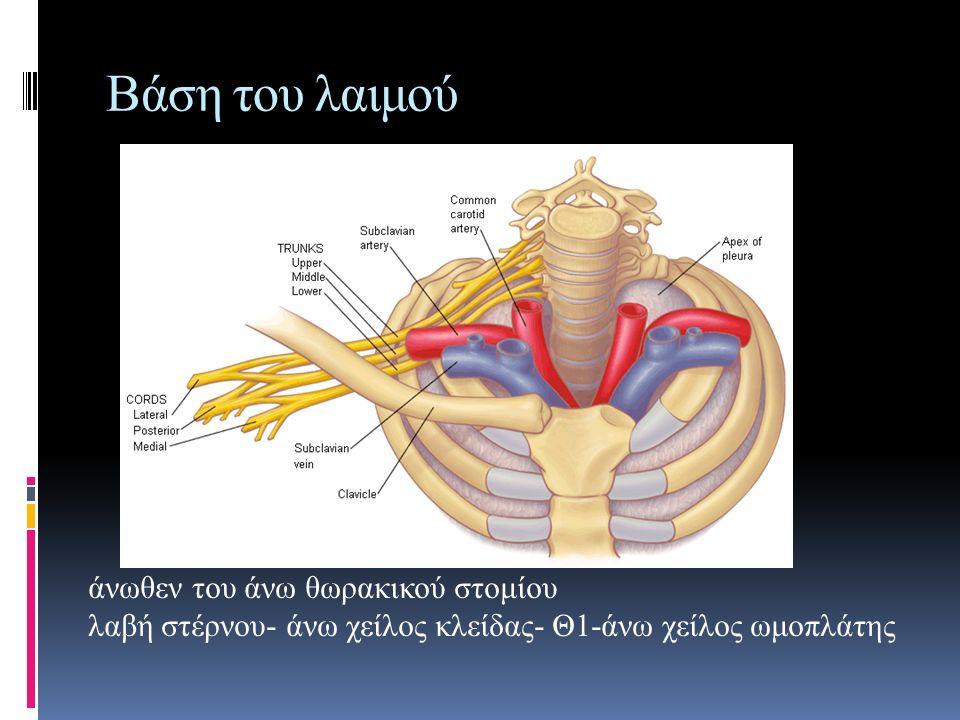Βάση του λαιμού άνωθεν του άνω θωρακικού στομίου