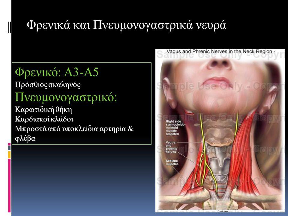 Φρενικά και Πνευμονογαστρικά νευρά