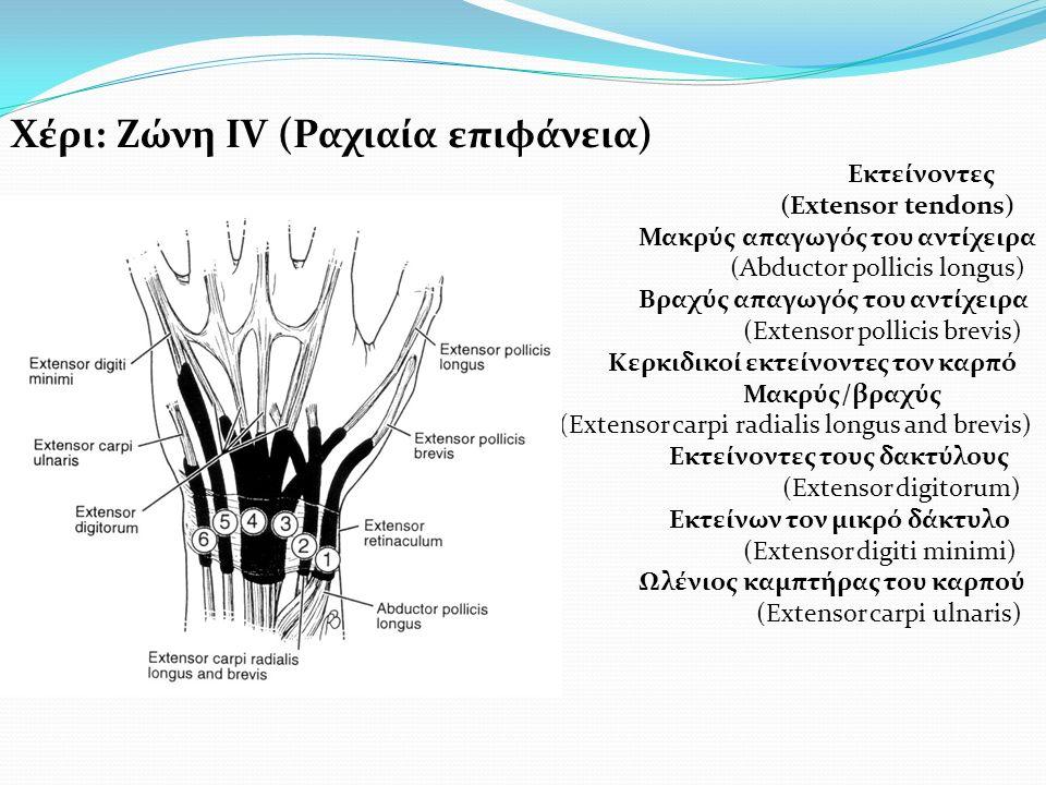 Χέρι: Ζώνη ΙV (Ραχιαία επιφάνεια)
