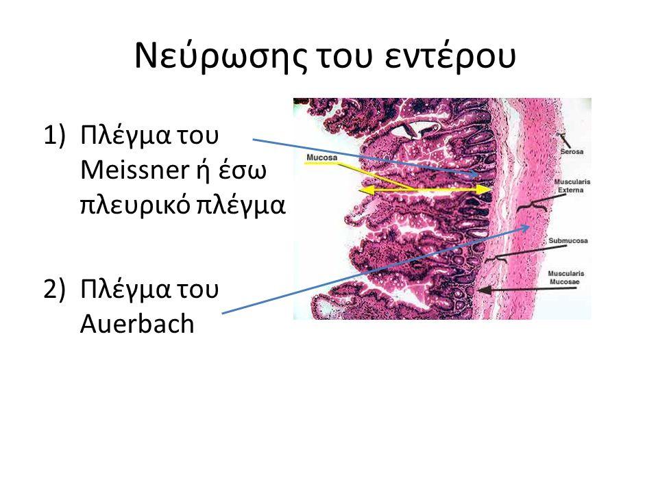 Πλέγμα του Meissner ή έσω πλευρικό πλέγμα Πλέγμα του Auerbach