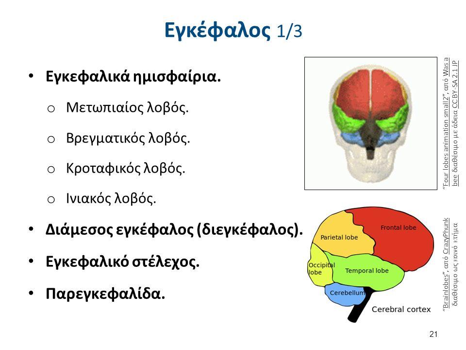Brain 2 , από Webber διαθέσιμο ως κοινό κτήμα