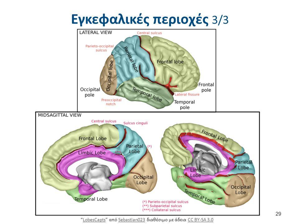 Διεγκέφαλος 1/2 Αποτελείται από τον: Θάλαμο
