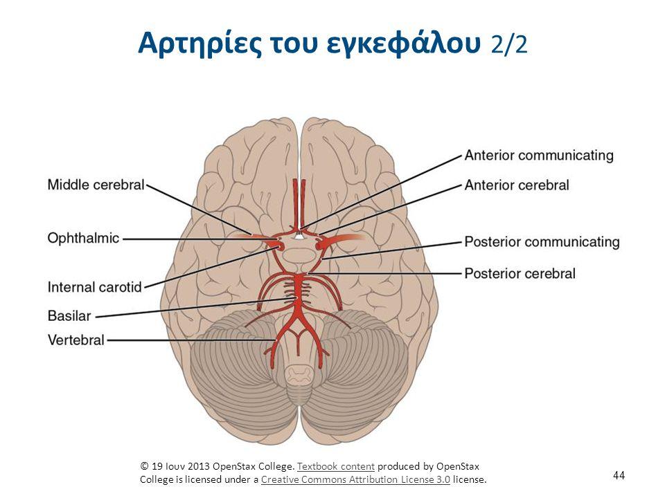 Αρτηρίες του εγκεφάλου αορτικό τόξο