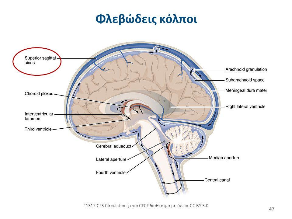 Νευρικό σύστημα Εγκεφαλονωτιαίο ή Ζωικό νευρικό σύστημα.