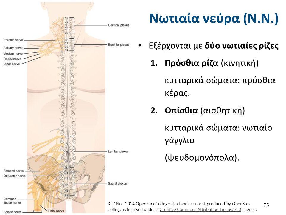 Ακολουθεί η φυσική εξέταση του Νευρικού Συστήματος...