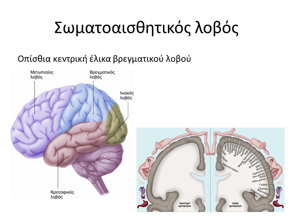 Σωματοαισθητικός λοβός