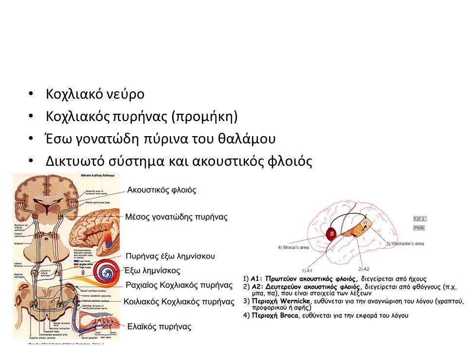 Κοχλιακό νεύρο Κοχλιακός πυρήνας (προμήκη) Έσω γονατώδη πύρινα του θαλάμου.