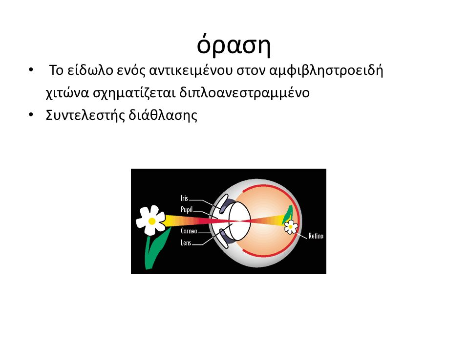 όραση Το είδωλο ενός αντικειμένου στον αμφιβληστροειδή