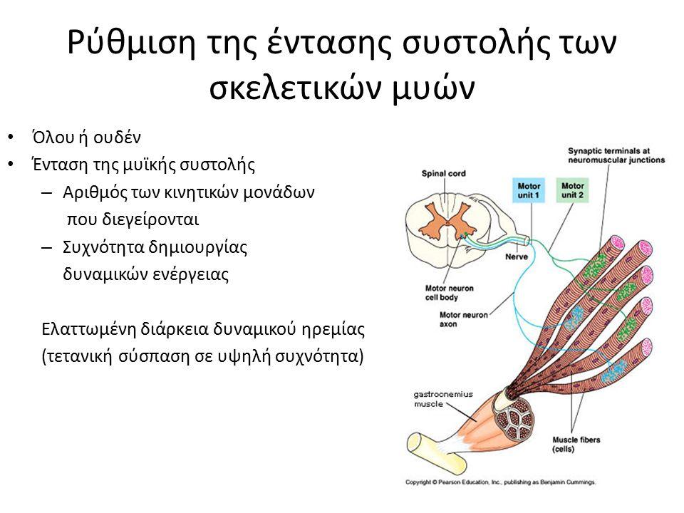 Ρύθμιση της έντασης συστολής των σκελετικών μυών