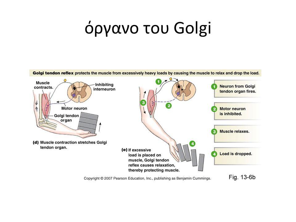 όργανο του Golgi