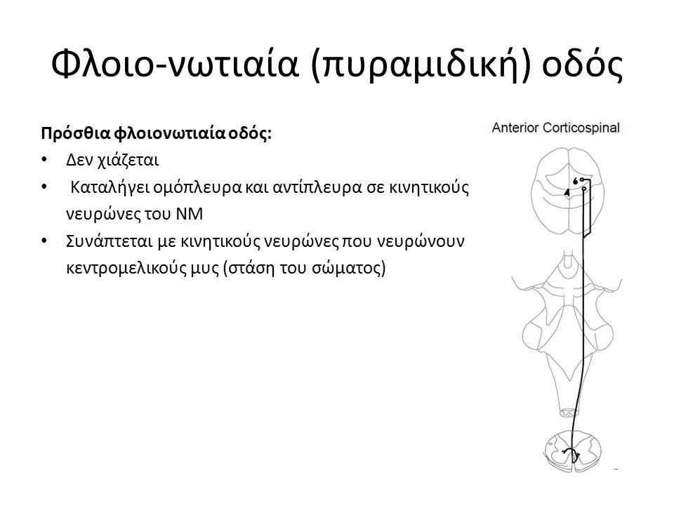 Φλοιο-νωτιαία (πυραμιδική) οδός