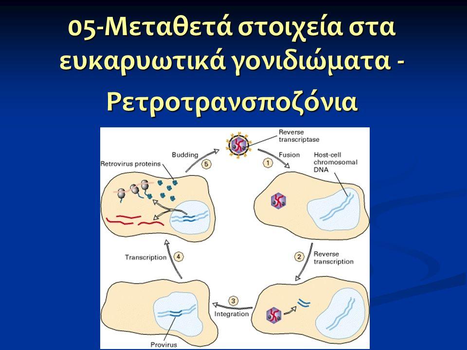 05-Μεταθετά στοιχεία στα ευκαρυωτικά γονιδιώματα -