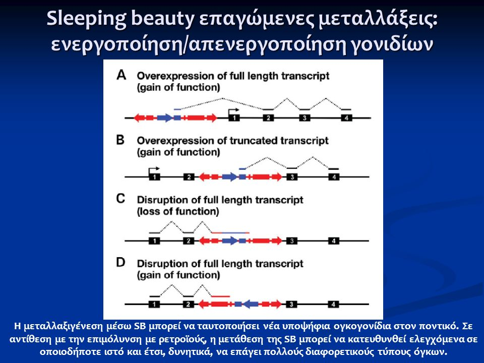 Sleeping beauty επαγώμενες μεταλλάξεις: ενεργοποίηση/απενεργοποίηση γονιδίων