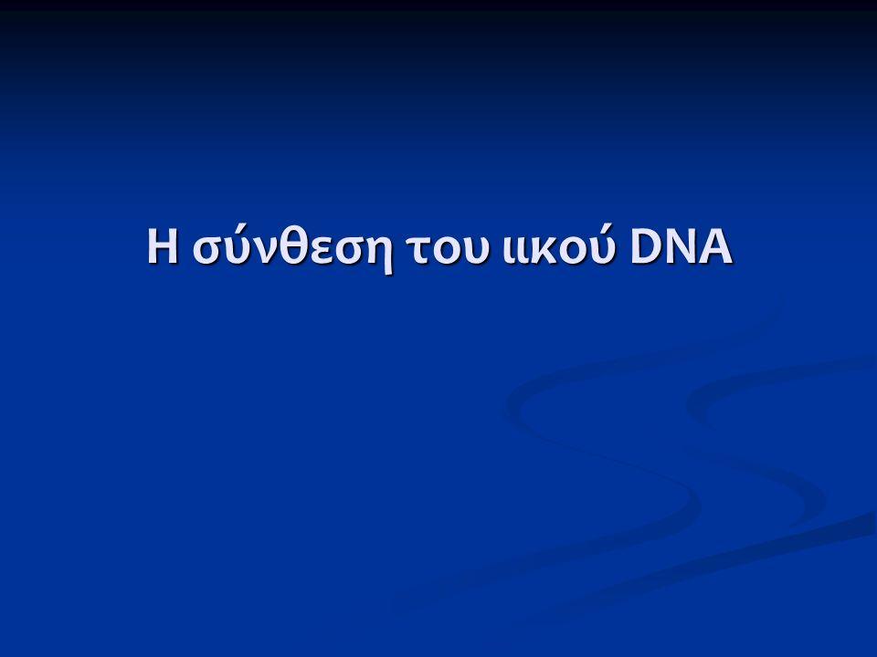 Η σύνθεση του ιικού DNA