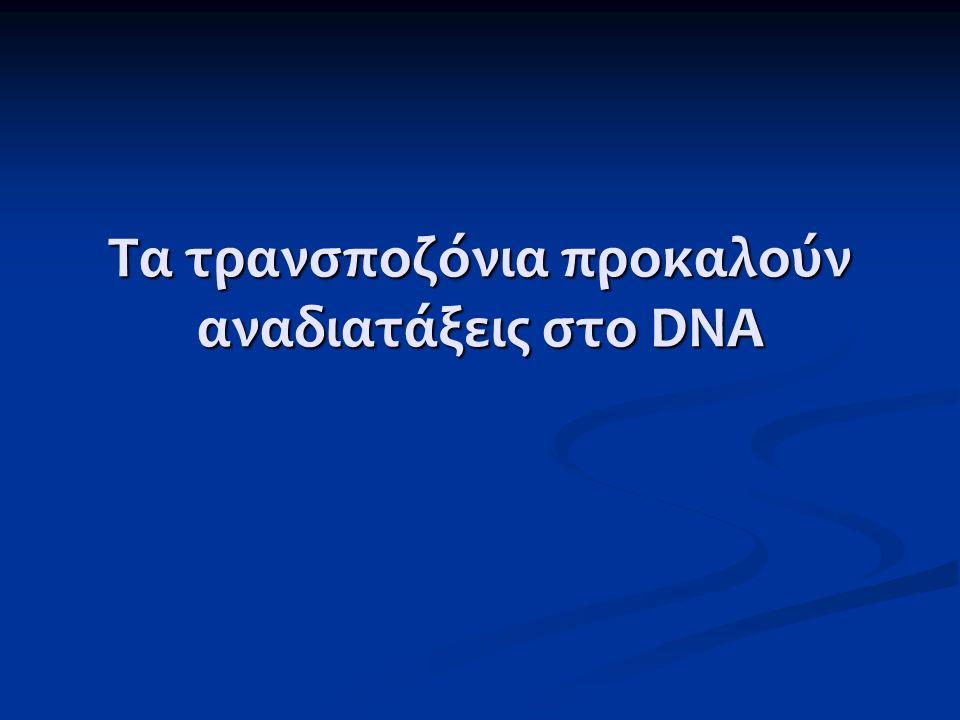 Τα τρανσποζόνια προκαλούν αναδιατάξεις στο DNA