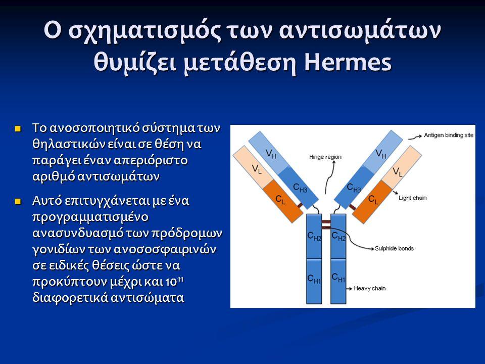 Ο σχηματισμός των αντισωμάτων θυμίζει μετάθεση Hermes