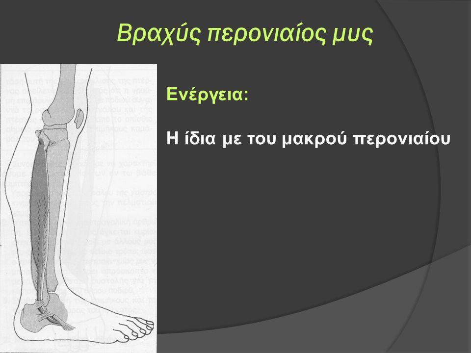 Βραχύς περονιαίος μυς Ενέργεια: Η ίδια με του μακρού περονιαίου