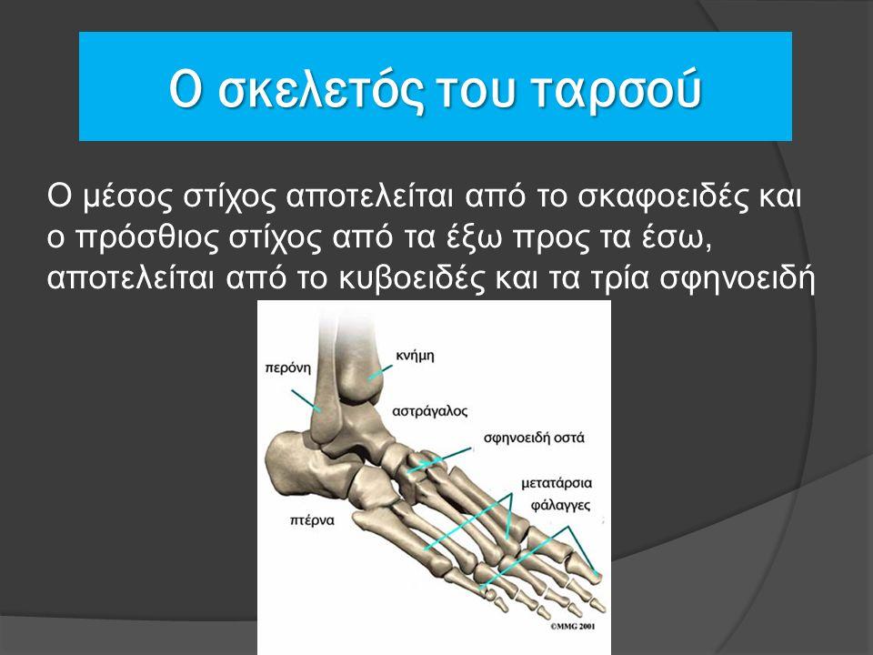 Ο σκελετός του ταρσού