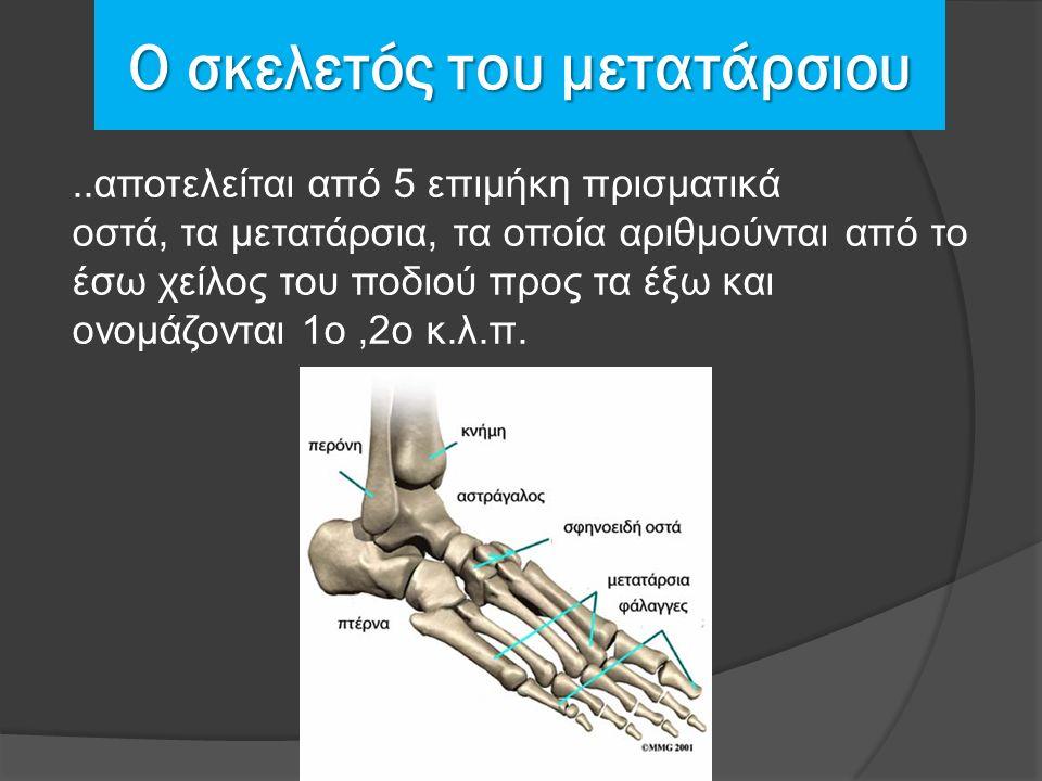 Ο σκελετός του μετατάρσιου