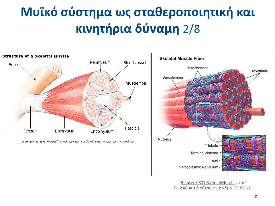 Μυϊκό σύστημα ως σταθεροποιητική και κινητήρια δύναμη 3/8