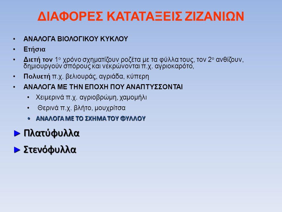 ΔΙΑΦΟΡΕΣ ΚΑΤΑΤΑΞΕΙΣ ΖΙΖΑΝΙΩΝ