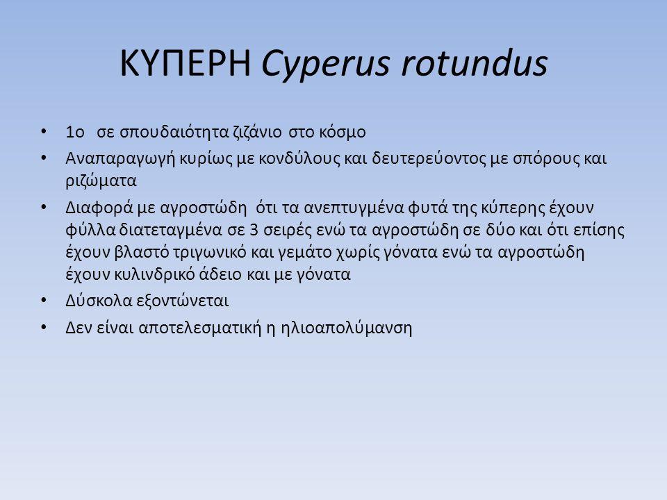 ΚΥΠΕΡΗ Cyperus rotundus
