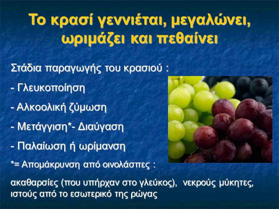 Το κρασί γεννιέται, μεγαλώνει, ωριμάζει και πεθαίνει