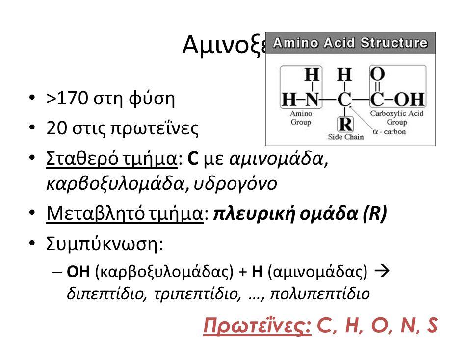 Αμινοξέα >170 στη φύση 20 στις πρωτεΐνες