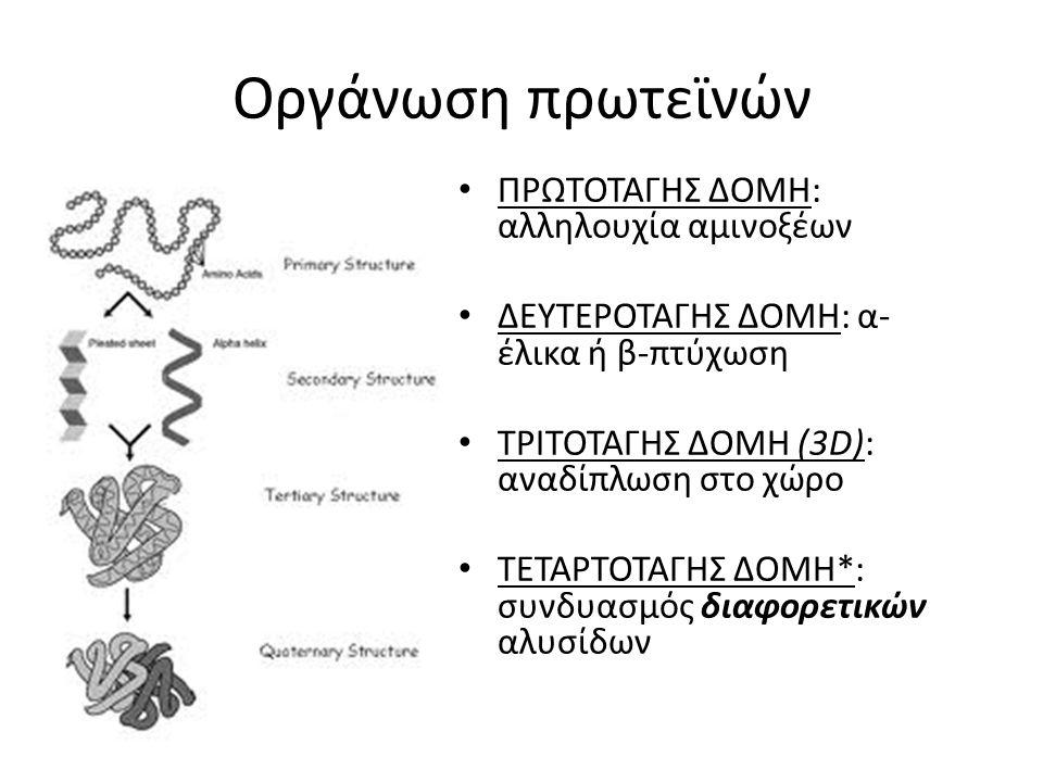 Οργάνωση πρωτεϊνών ΠΡΩΤΟΤΑΓΗΣ ΔΟΜΗ: αλληλουχία αμινοξέων