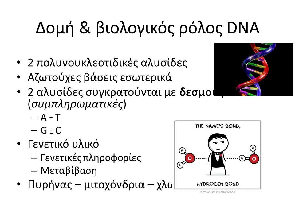 Δομή & βιολογικός ρόλος DNA