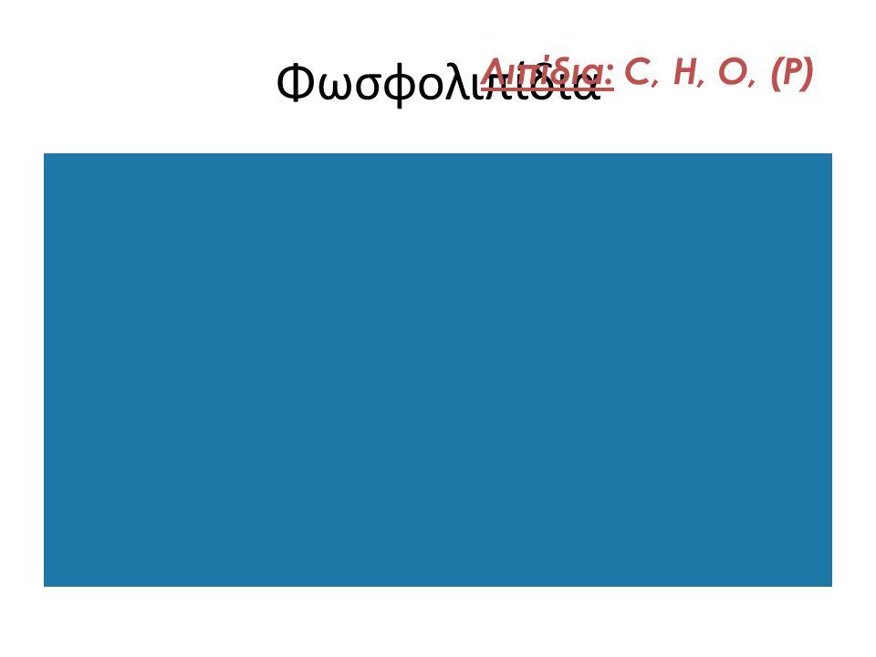 Φωσφολιπίδια Λιπίδια: C, H, O, (P)