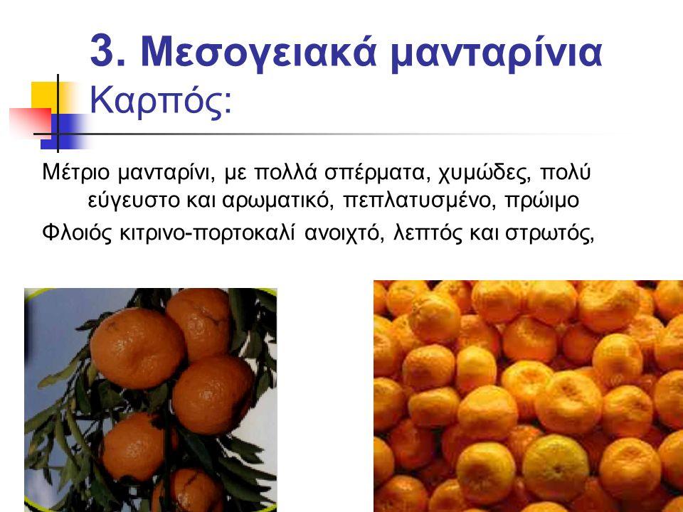 3. Μεσογειακά μανταρίνια Καρπός: