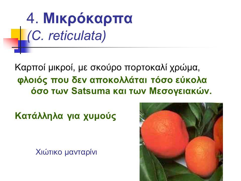 4. Μικρόκαρπα (C. reticulata)