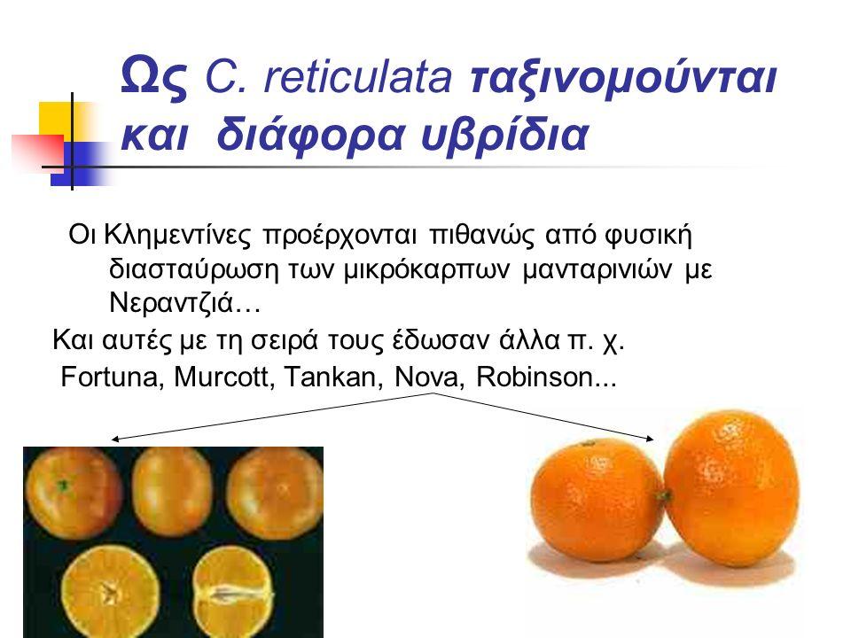 Ως C. reticulata ταξινομούνται και διάφορα υβρίδια